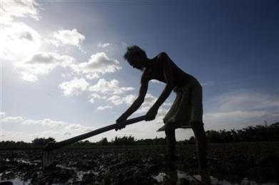 A farmer works in a paddy field on the outskirts of Agartala, capital of Tripura, July 9, 2012. REUTERS/Jayanta Dey
