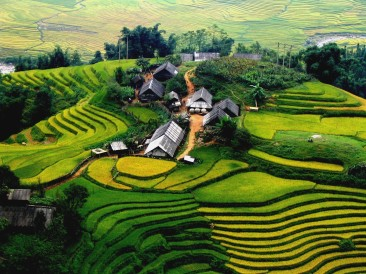 sapa-rice-field